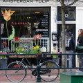 tulpenmuseum-amsterdam2